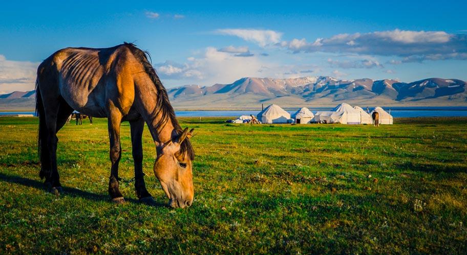 Kirgistan Abenteuer Pferd Jurte